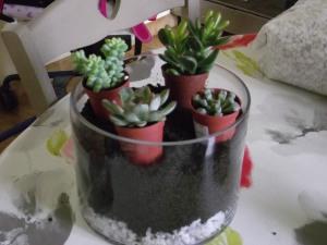 Etape 3 : je prépositionne mes plantes pour voir ce que cela va donner puis j'enlève les pots et je complète avec le terreau.