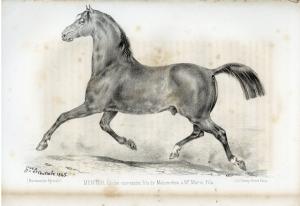 Carrossier normand (race aujourd'hui disparue)
